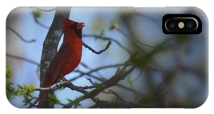 I Want To Sing A Song To You Lord IPhone X Case featuring the photograph I Want To Sing A Song To You Lord by Maria Urso