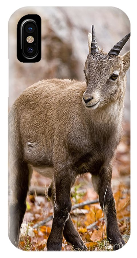 Ibex IPhone X Case featuring the photograph Ibex Pictures 10 by World Wildlife Photography