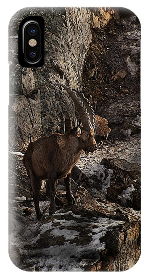 Ibex IPhone X Case featuring the photograph Ibex Pictures 86 by World Wildlife Photography