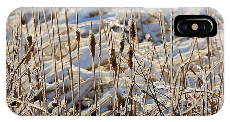 Ice IPhone X Case featuring the photograph Ice Coated Bullrushes by Louise Heusinkveld