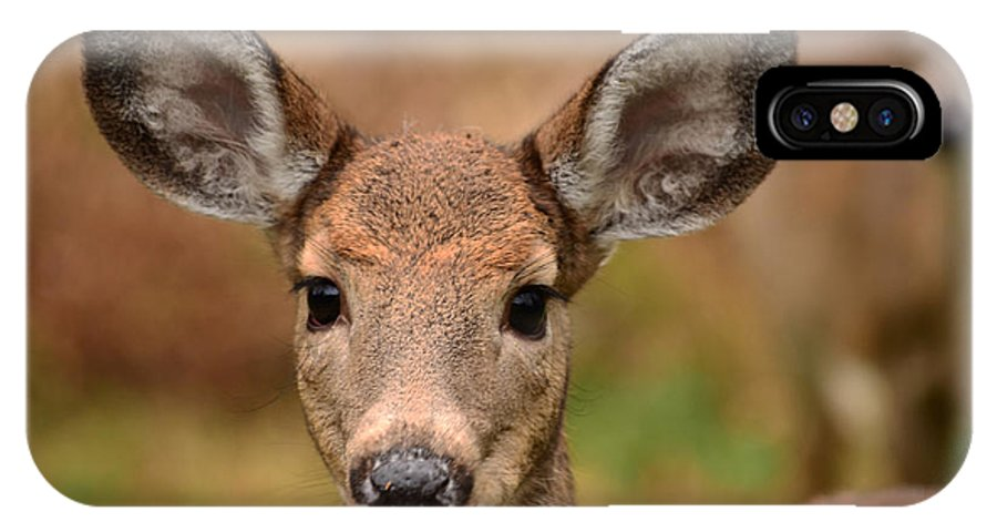 Deer IPhone X Case featuring the photograph I'm Never Alone by Lori Tambakis