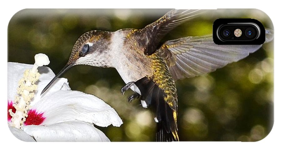 Hummingbird IPhone X Case featuring the photograph Immature Ruby-throated Hummingbird by C Thorton