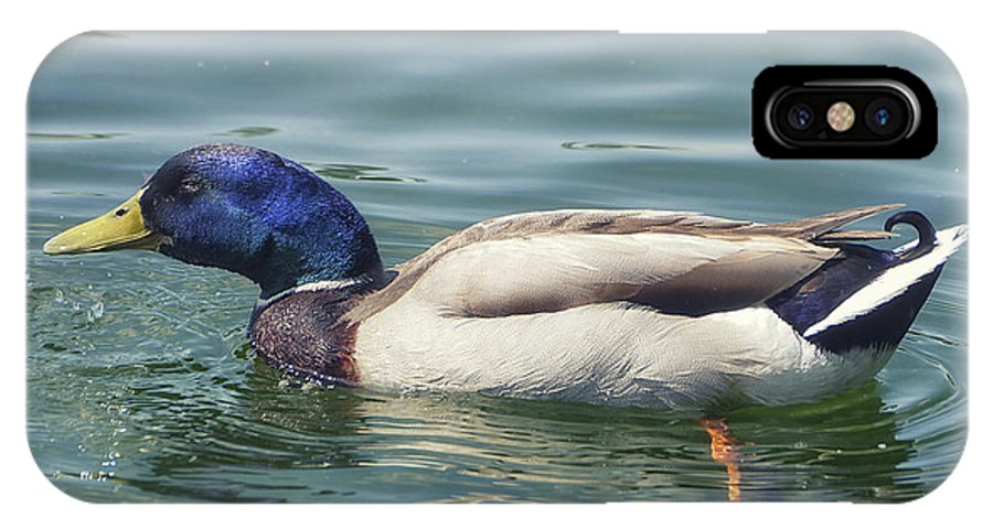 Photo IPhone X / XS Case featuring the photograph In A Hurry by Jutta Maria Pusl