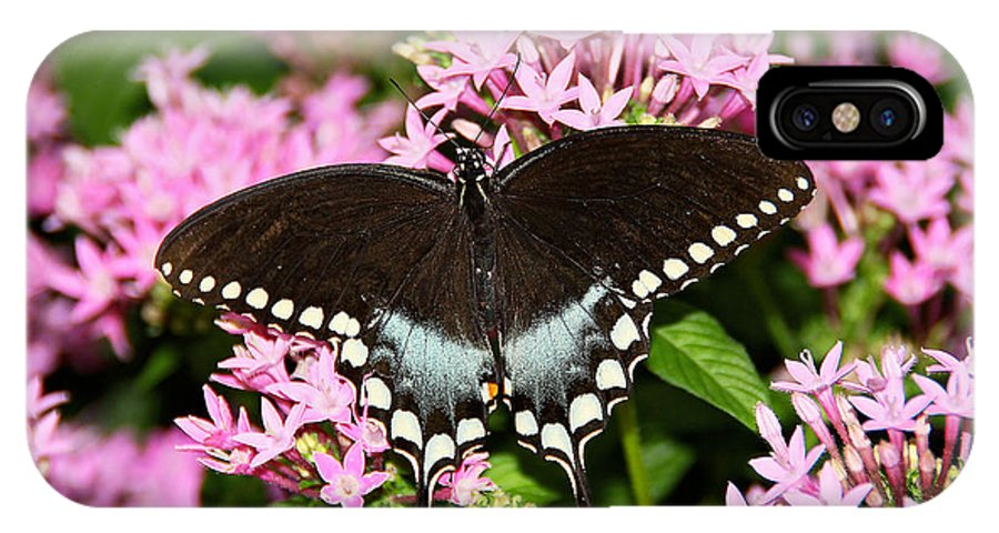 Butterfly IPhone X Case featuring the photograph In All Her Glory by Deb Buchanan