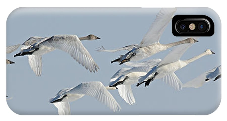 Photography IPhone X Case featuring the photograph In Flight by Larry Ricker