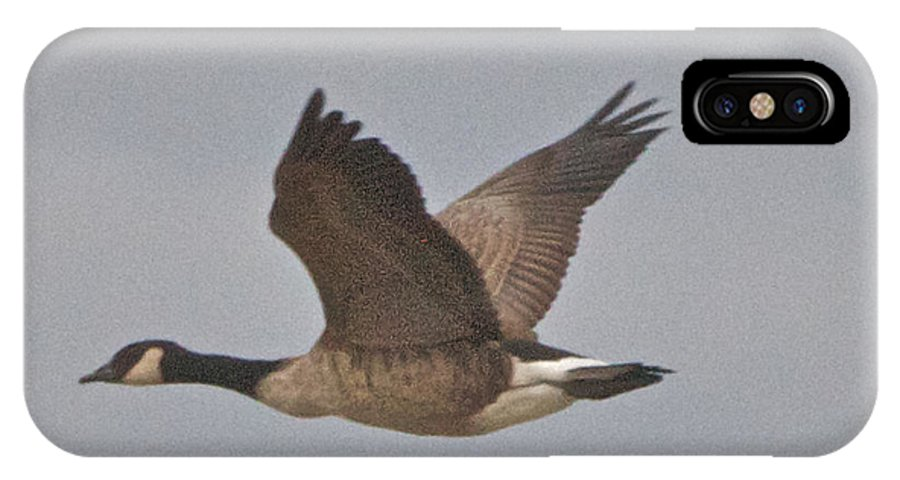 Canadian Geese IPhone X Case featuring the photograph In Flight by William Norton
