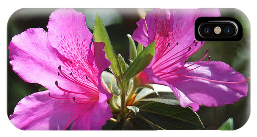 Azalea IPhone X Case featuring the photograph In Full Bloom by Suzanne Gaff