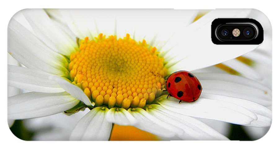 Ladybug IPhone X Case featuring the photograph In Love With A Ladybug And A Daisy by Tisha Clinkenbeard