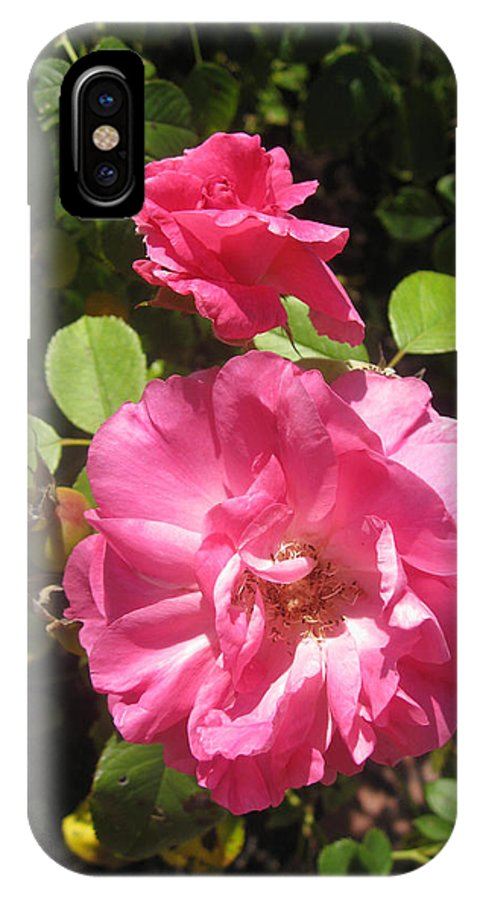 Pink Rode Photo IPhone X Case featuring the photograph In My Garden by Kimber Butler