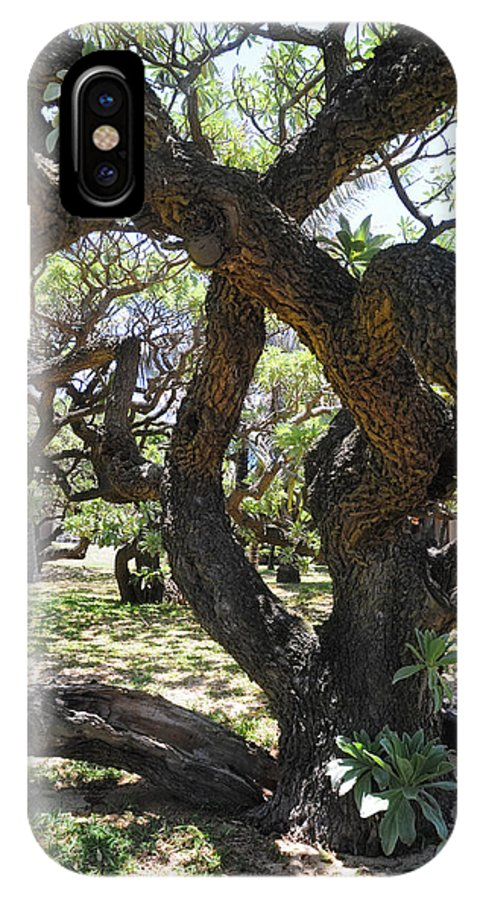 Tree IPhone X Case featuring the photograph In The Depth Of Enchanting Forest IIi by Jenny Rainbow