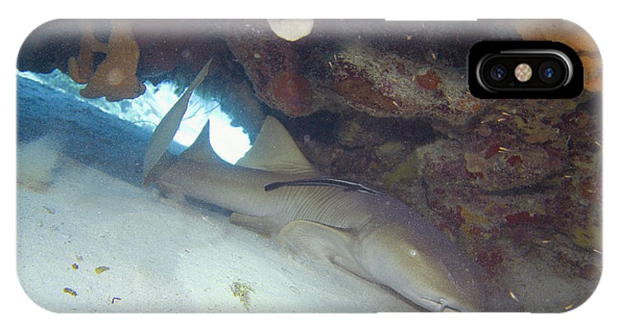 Shark IPhone X Case featuring the photograph In The Dragon's Lair by Jim Murphy