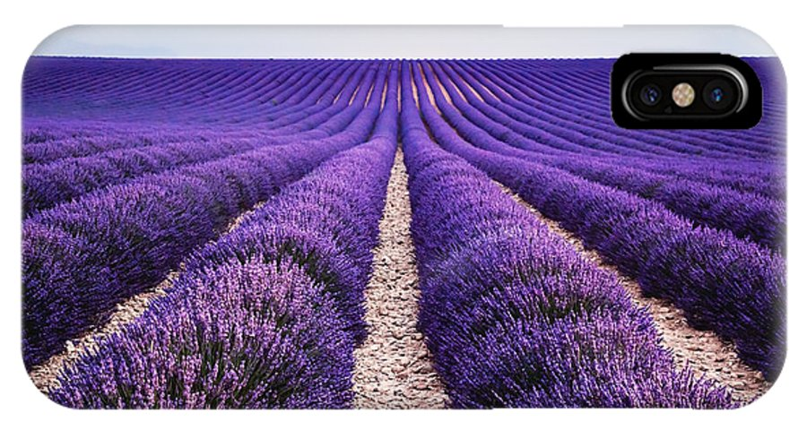 Lavender IPhone X Case featuring the photograph In The Lavender by Matteo Colombo