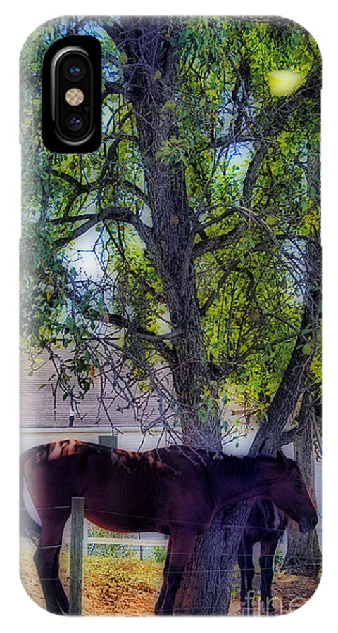 Scenic Tours IPhone X Case featuring the photograph In The Shade by Skip Willits