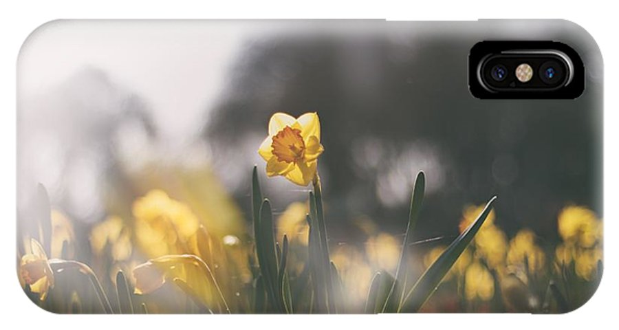 Yellow Flowers IPhone X Case featuring the photograph In The Sun by Roberto Cespedes