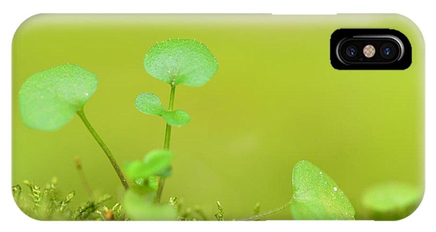 Botanical IPhone X Case featuring the photograph In The Valley Of The Leprechauns by Donna Blackhall