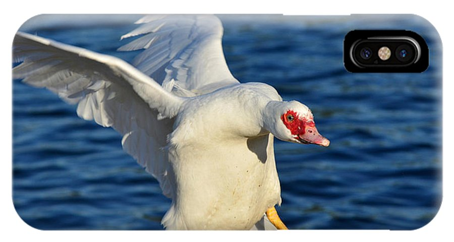 Muscovy Duck IPhone X Case featuring the photograph Incoming Muscovy by Fraida Gutovich