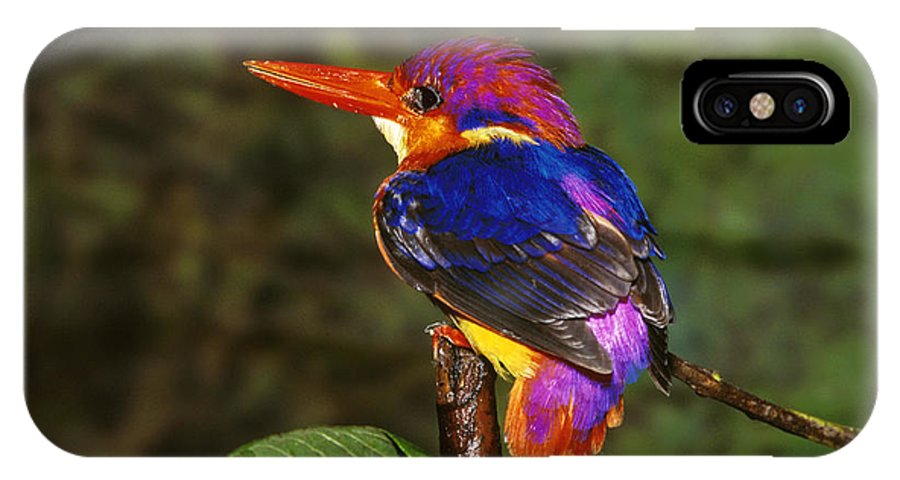 Multi Colored; Vibrant Color; Branch; Perching; No People; Horizontal; Outdoors; Day; Full Length; One Animal; Wildlife; Three-toed Kingfisher; India IPhone X Case featuring the photograph India Three Toed Kingfisher by Anonymous