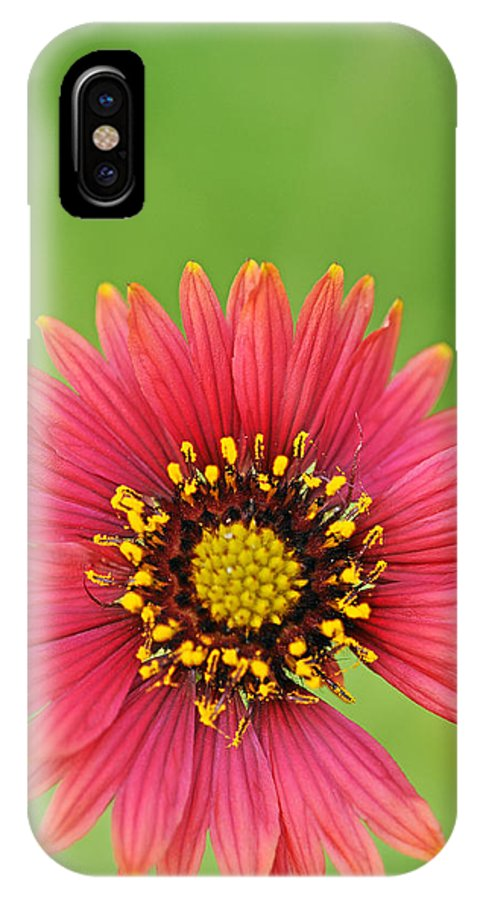 Wildflower IPhone X Case featuring the photograph Indian Blanket by Keith Gondron