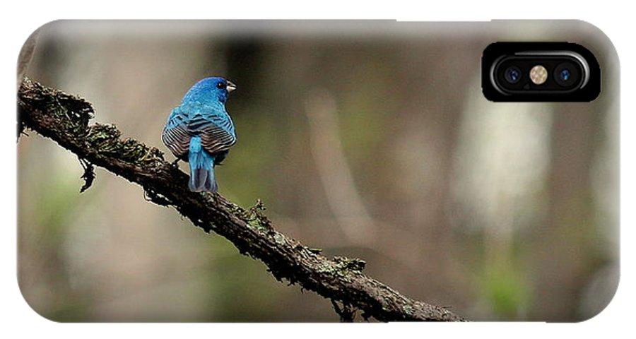 Bird IPhone X Case featuring the photograph Indigo Bunting 2 by Rosanne Jordan