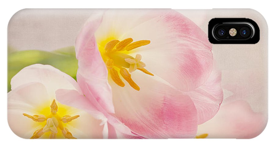 Tulip IPhone X Case featuring the photograph Inner Beauty - Pink Tulips by Kim Hojnacki