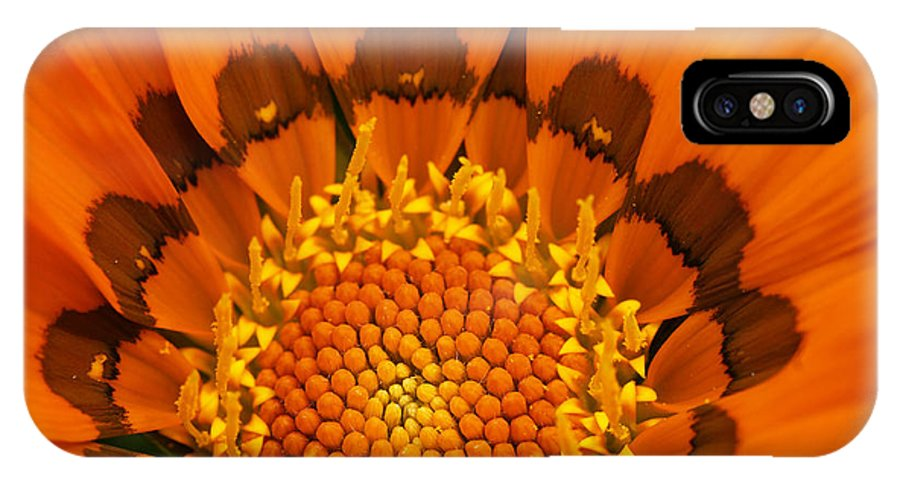 Gazania IPhone X Case featuring the photograph Inside Orange Flower by Sylvie Bouchard
