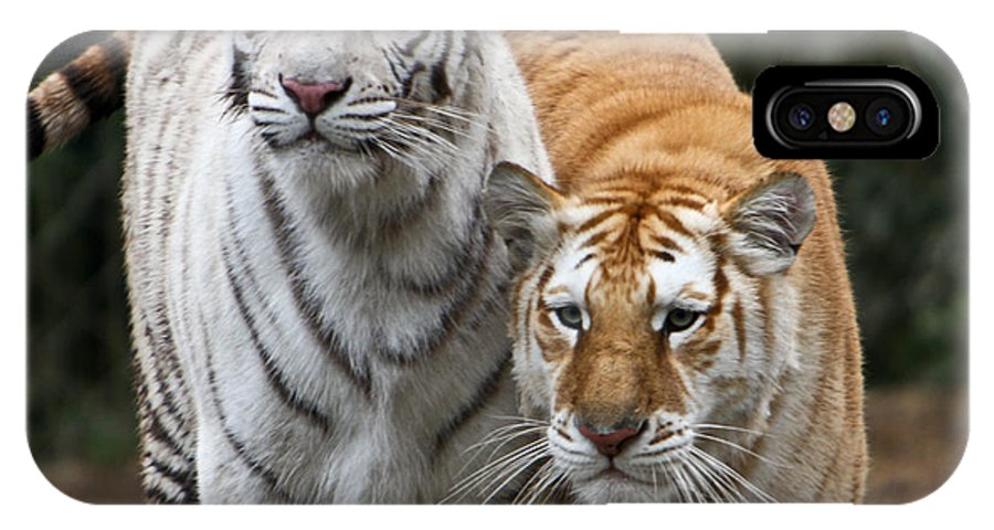 Tiger IPhone X Case featuring the photograph Intent Tigers by Douglas Barnett