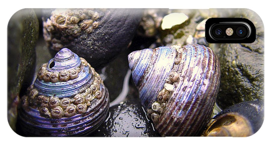 Iridescent IPhone X Case featuring the photograph Iridescent Purple Seashells by Betty Depee
