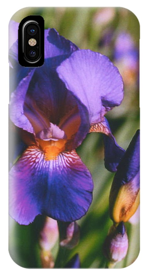 Iris IPhone X / XS Case featuring the photograph Iris Bloom by Mary Armstrong