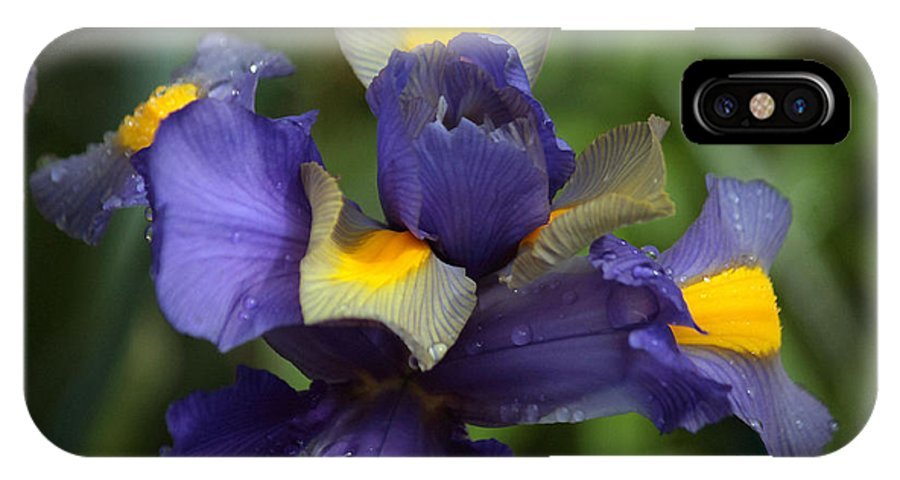 Blue Flowers IPhone X Case featuring the photograph Iris Close Up by Luv Photography