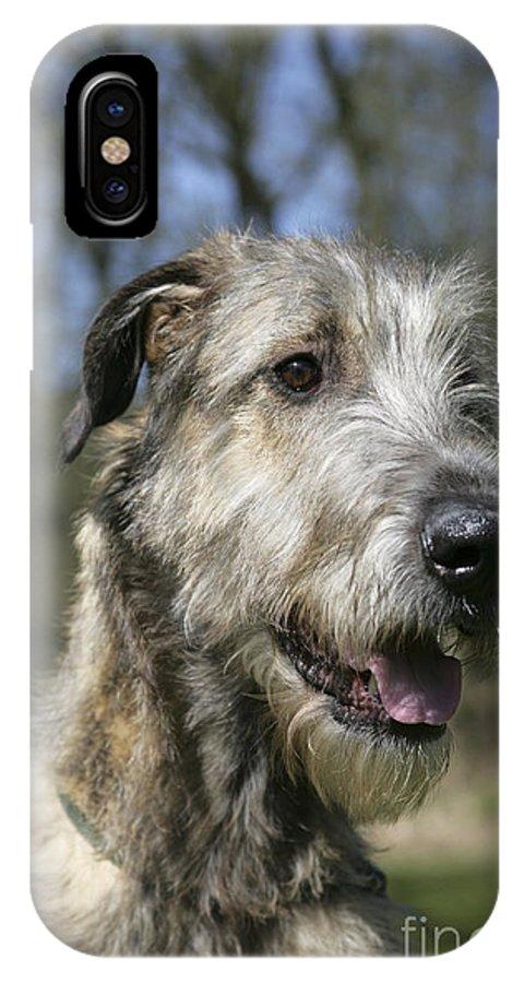 Irish Wolfhound IPhone X / XS Case featuring the photograph Irish Wolfhound by John Daniels