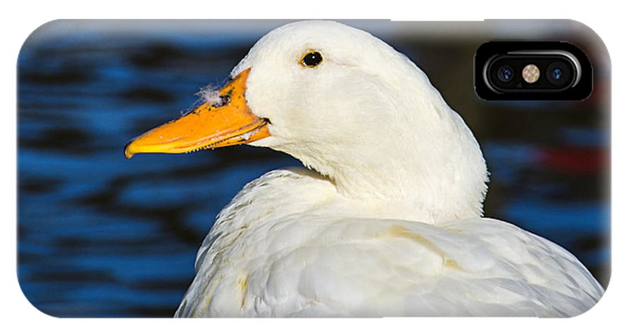 Beak IPhone X Case featuring the photograph Is There A Feather On My Nose by Susie Peek