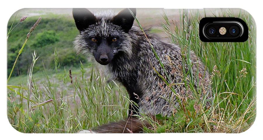 Red Fox IPhone X Case featuring the photograph Island Dweller by Kae Cheatham