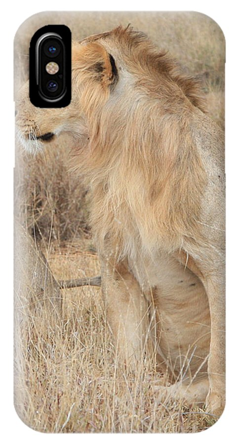 Isolated IPhone X Case featuring the photograph Isolated Lion Staring by Bob Parr