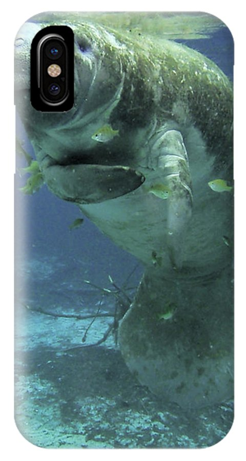 Manatee IPhone X Case featuring the photograph Itchy Manatee by Daniel Caron