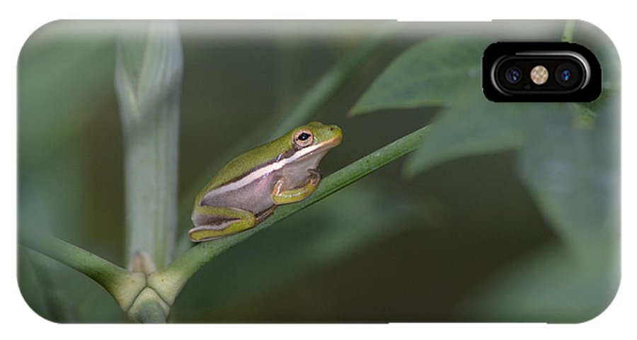 Frog IPhone X Case featuring the photograph Its Me Again Lord by Kathy Gibbons