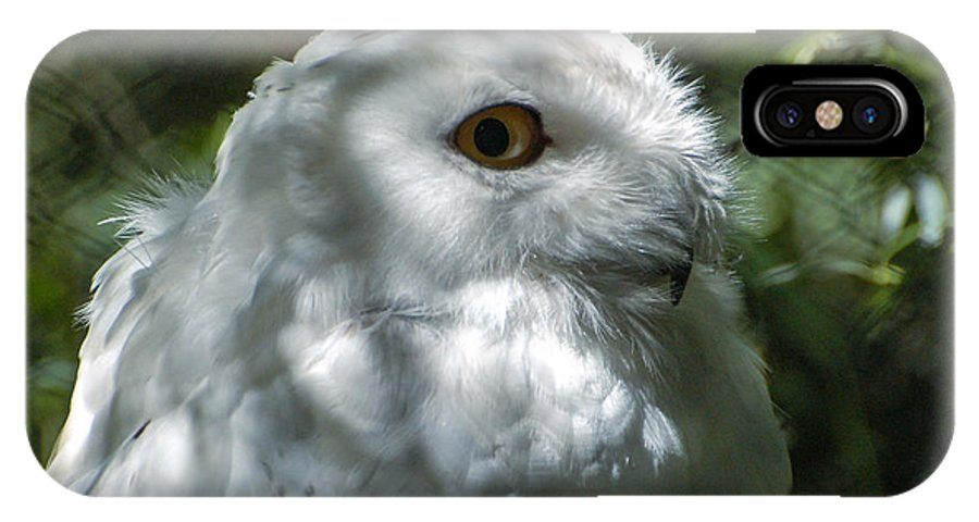 Owl IPhone X Case featuring the photograph I've Got My Eye On You by Rich Priest