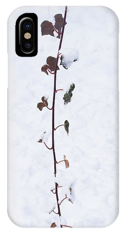 Ivy IPhone X Case featuring the photograph Ivy In Snow by Sharon Popek