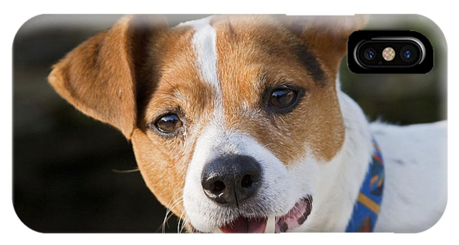 Jack Russell IPhone X / XS Case featuring the photograph Jack Russell Terrier by Brian Bevan