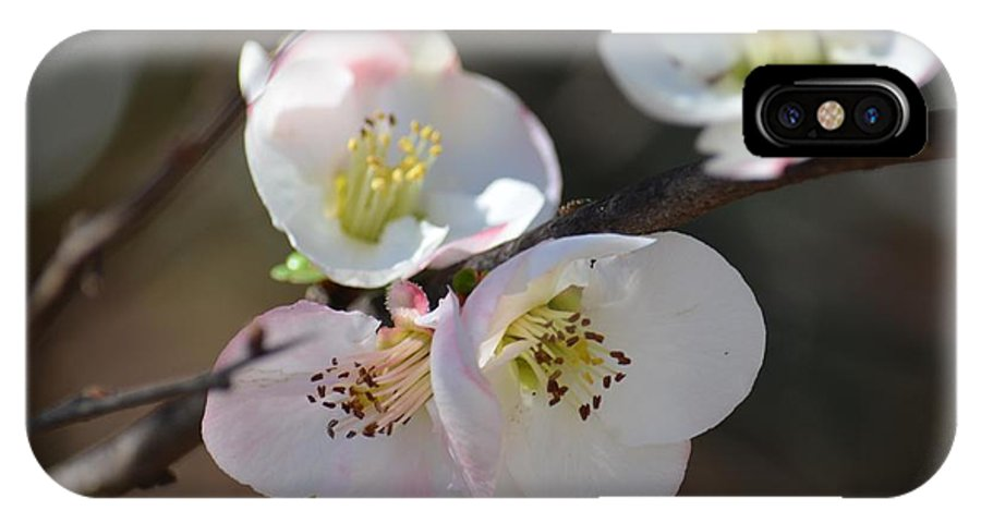Japanese Quince 4 IPhone X Case featuring the photograph Japanese Quince 4 by Maria Urso