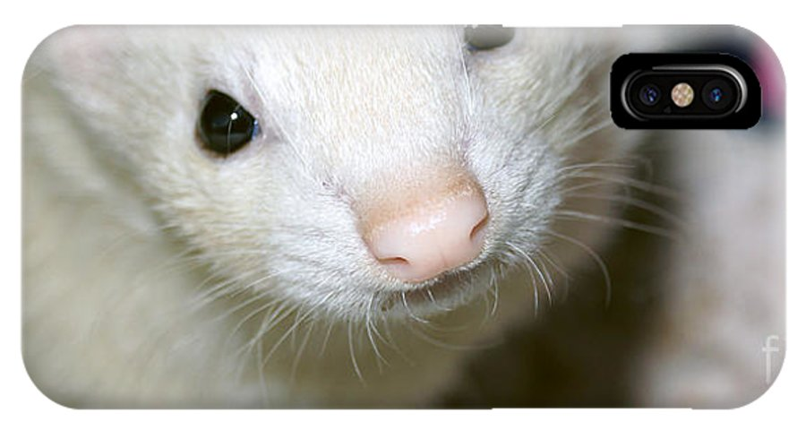 Ferret IPhone X Case featuring the photograph Jezebel by Cassandra Buckley