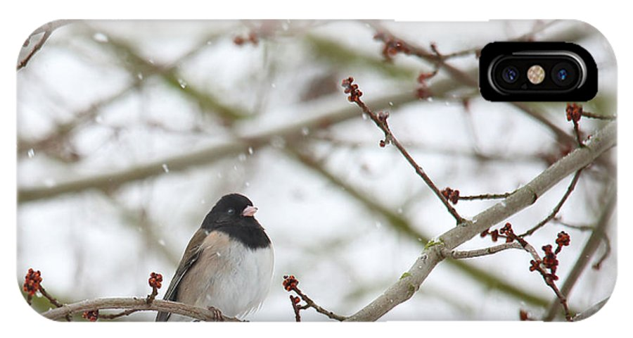 Junco IPhone X Case featuring the photograph Junco In Snow by Rebecca Cozart