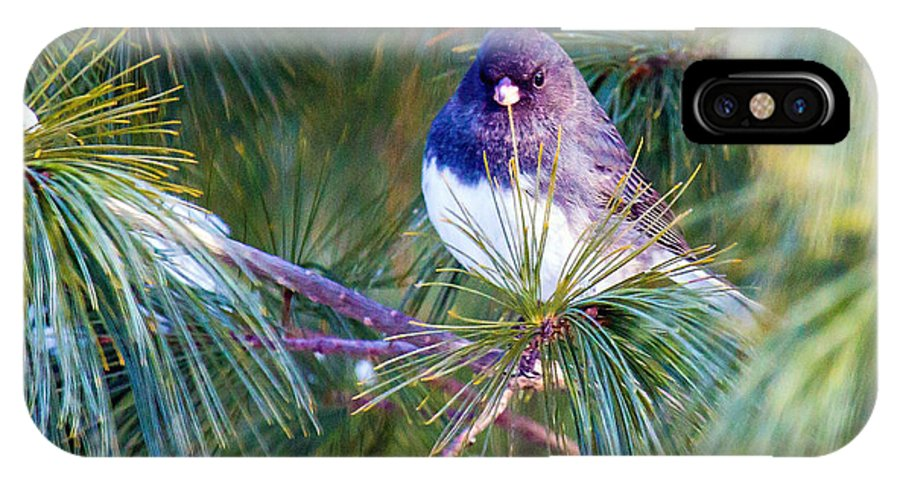 Junco IPhone X Case featuring the photograph Junco by Rob Hawker