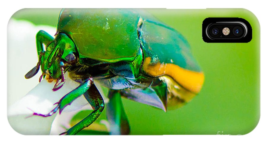 June IPhone X Case featuring the photograph June Bug Fig Beetle by Michael Moriarty