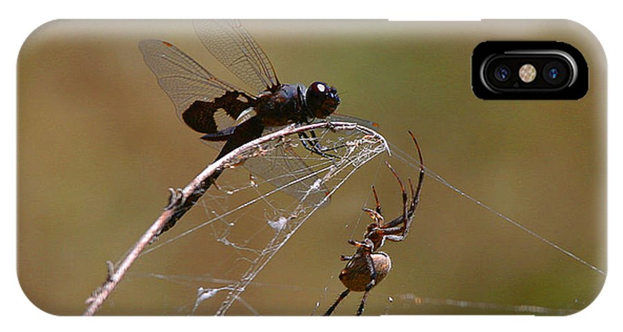 Spider IPhone X Case featuring the photograph Just A Little Closer by Robert Woodward