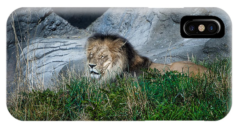 Rocks IPhone X Case featuring the photograph Just Lion Around by Rich Priest