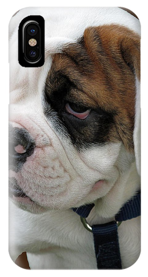 Pet IPhone X Case featuring the photograph Just Too Cute by Barbara McDevitt