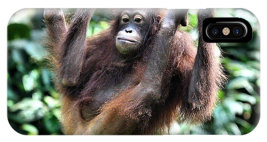 Orangutan IPhone X Case featuring the photograph Juvenile Orangutan Borneo by Carole-Anne Fooks