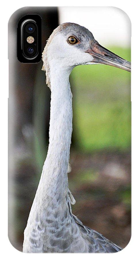Bird IPhone X Case featuring the photograph Juvenile Sandhill Crane Grus Canadensis Pratensis I Usa by Sally Rockefeller