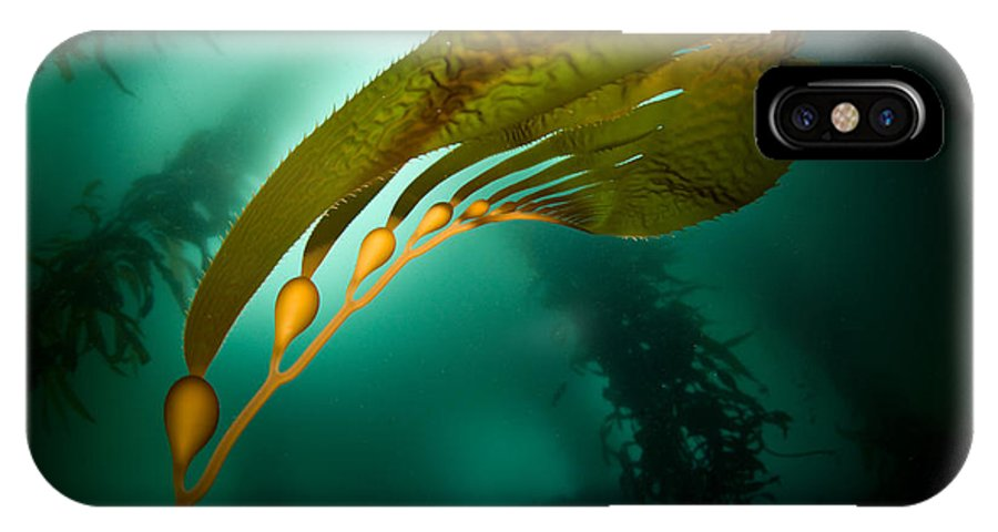Kelp Forest IPhone X / XS Case featuring the photograph Kelp Forest by Ethan Daniels