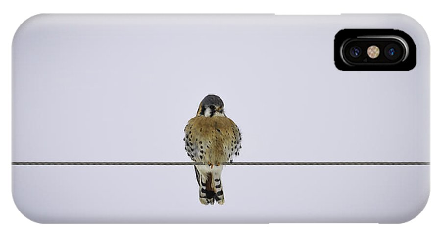 American Kestrel (falco Sparverius) IPhone X Case featuring the photograph Kestrel Alone On A Wire by Thomas Young